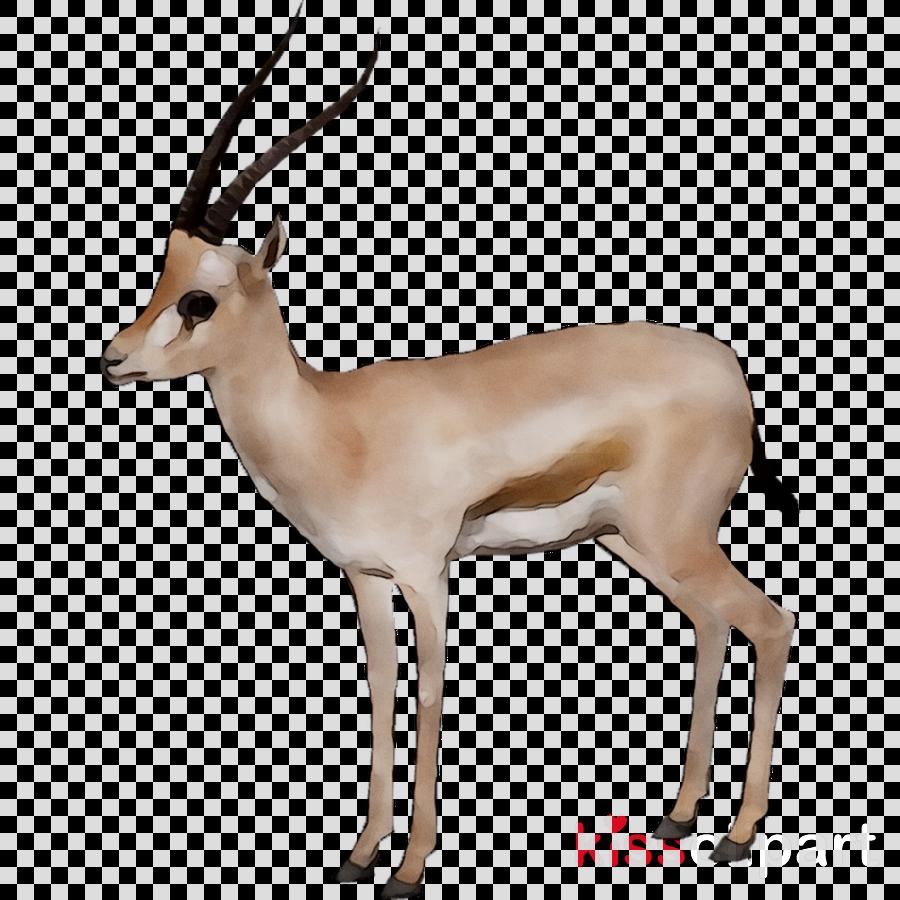 Family cartoon deer archery. Hunting clipart gazelle