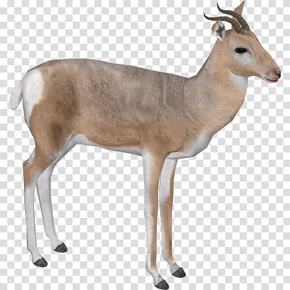 Hunting clipart gazelle. Impala arabian mountain pic