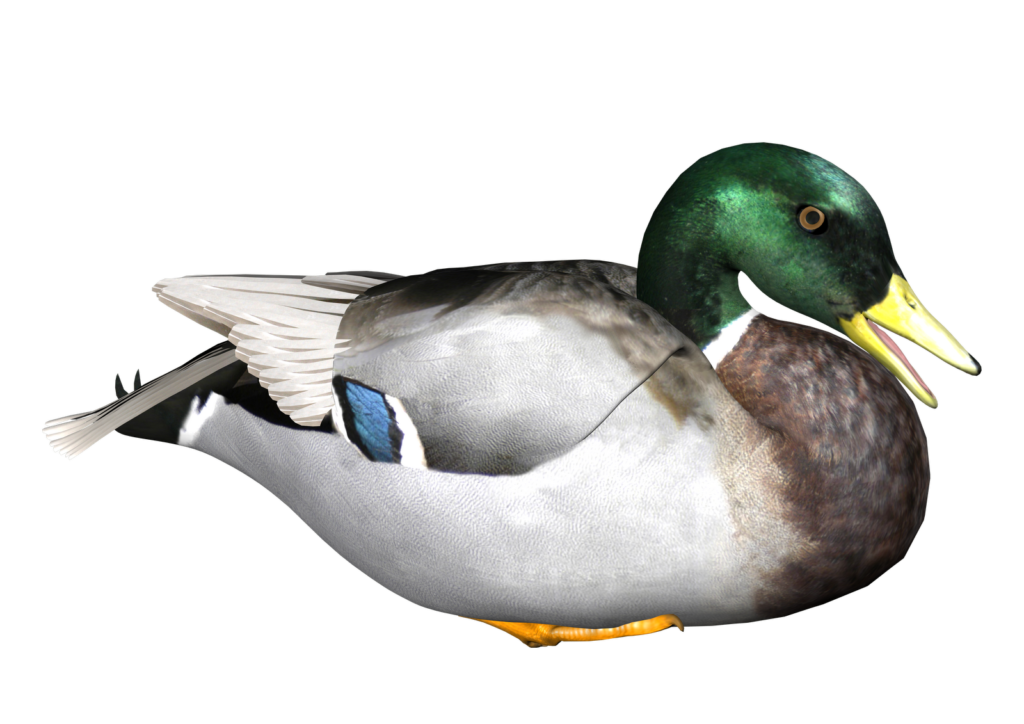 Duck transparent background peoplepng. Hunting clipart goose hunting