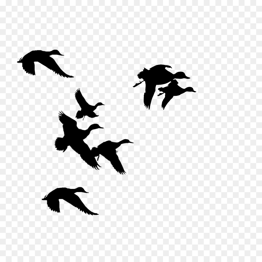 Water background duck silhouette. Hunting clipart goose hunting