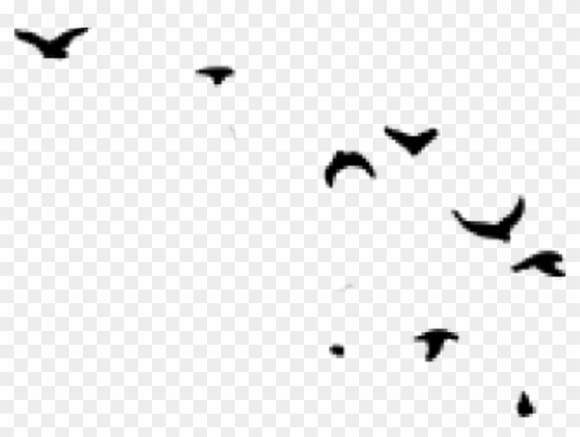 Report abuse black and. Hunting clipart hunting dove