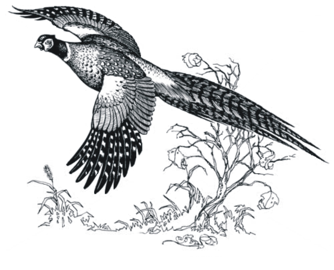 Hunting clipart quail. Free cliparts download clip