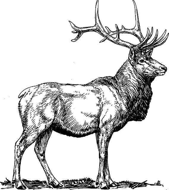 Free image on pixabay. Hunting clipart sambar deer