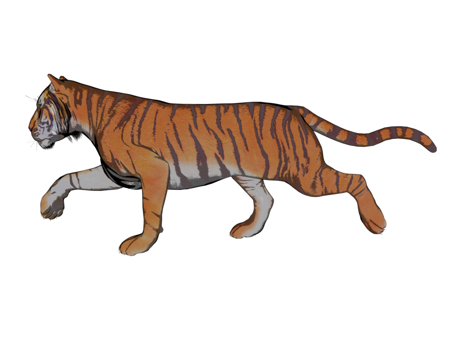 Hunting clipart tiger clipart. Pose of a gazillion