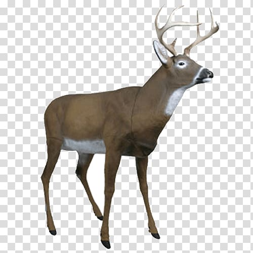 White tailed deer decoy. Hunting clipart transparent background