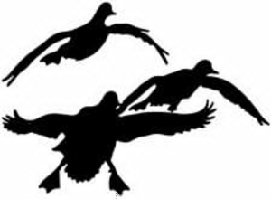 Hunting clipart waterfowl hunting. Free duck images at