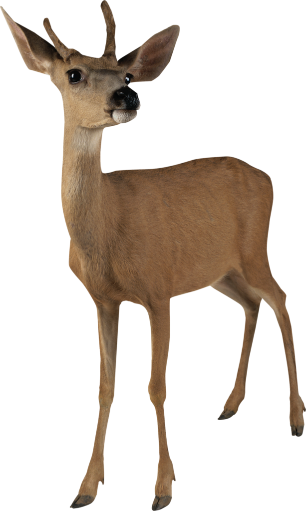 Hunting clipart wild life. Carena winter is coming