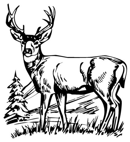 Hunting clipart wild life. Free scenes cliparts download