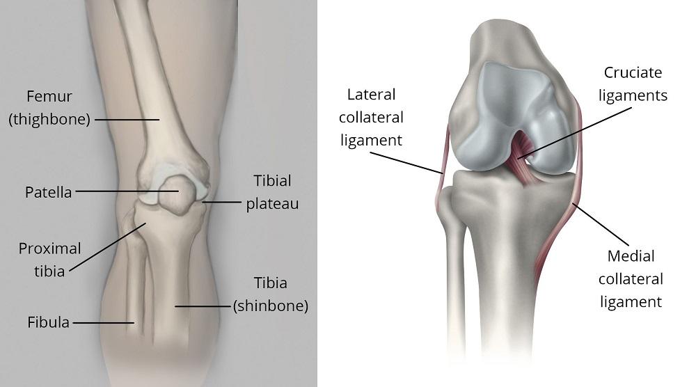 Fractures of the proximal. Hurt clipart broken knee