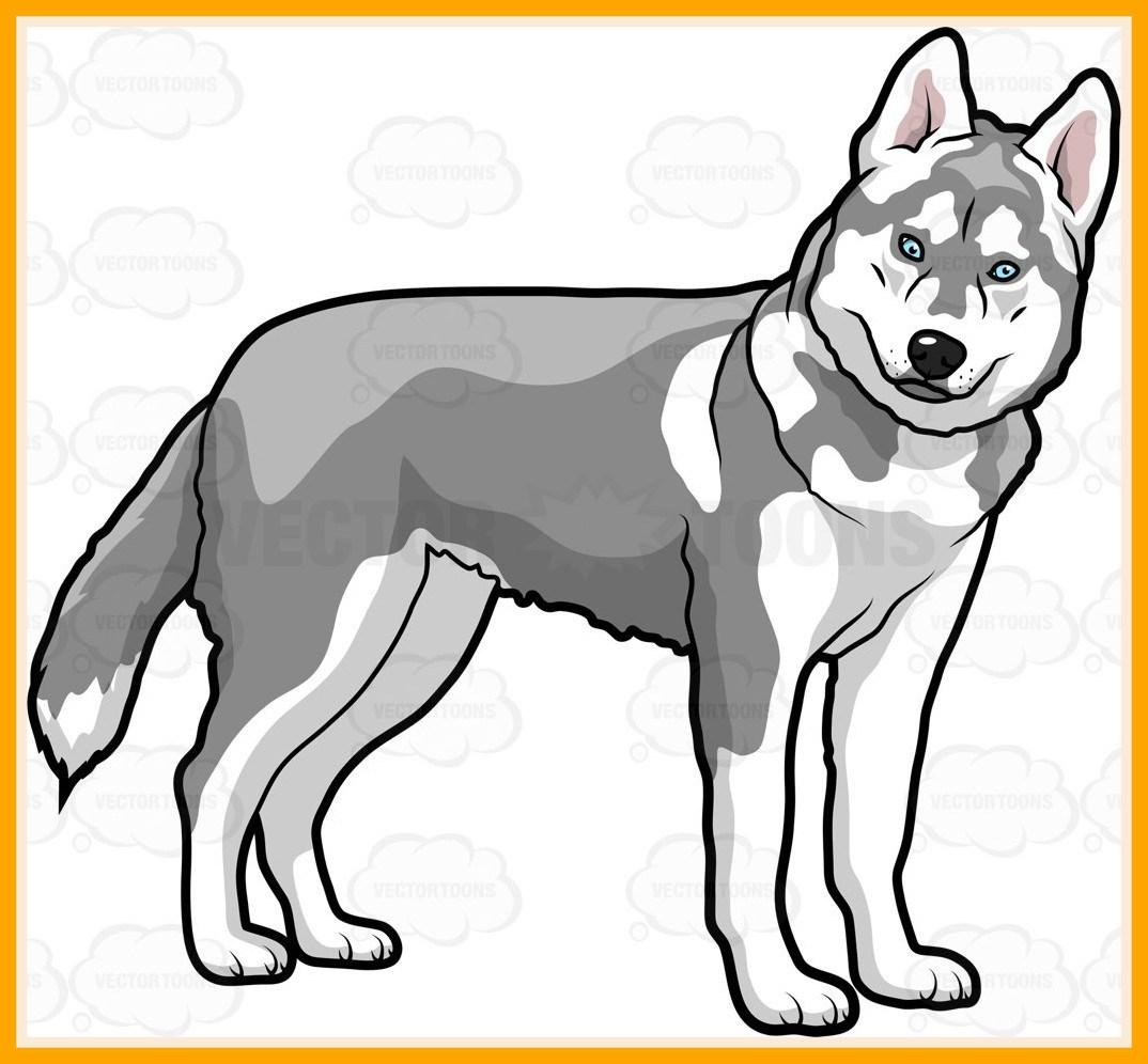 Husky clipart. Cute puppy alternative design