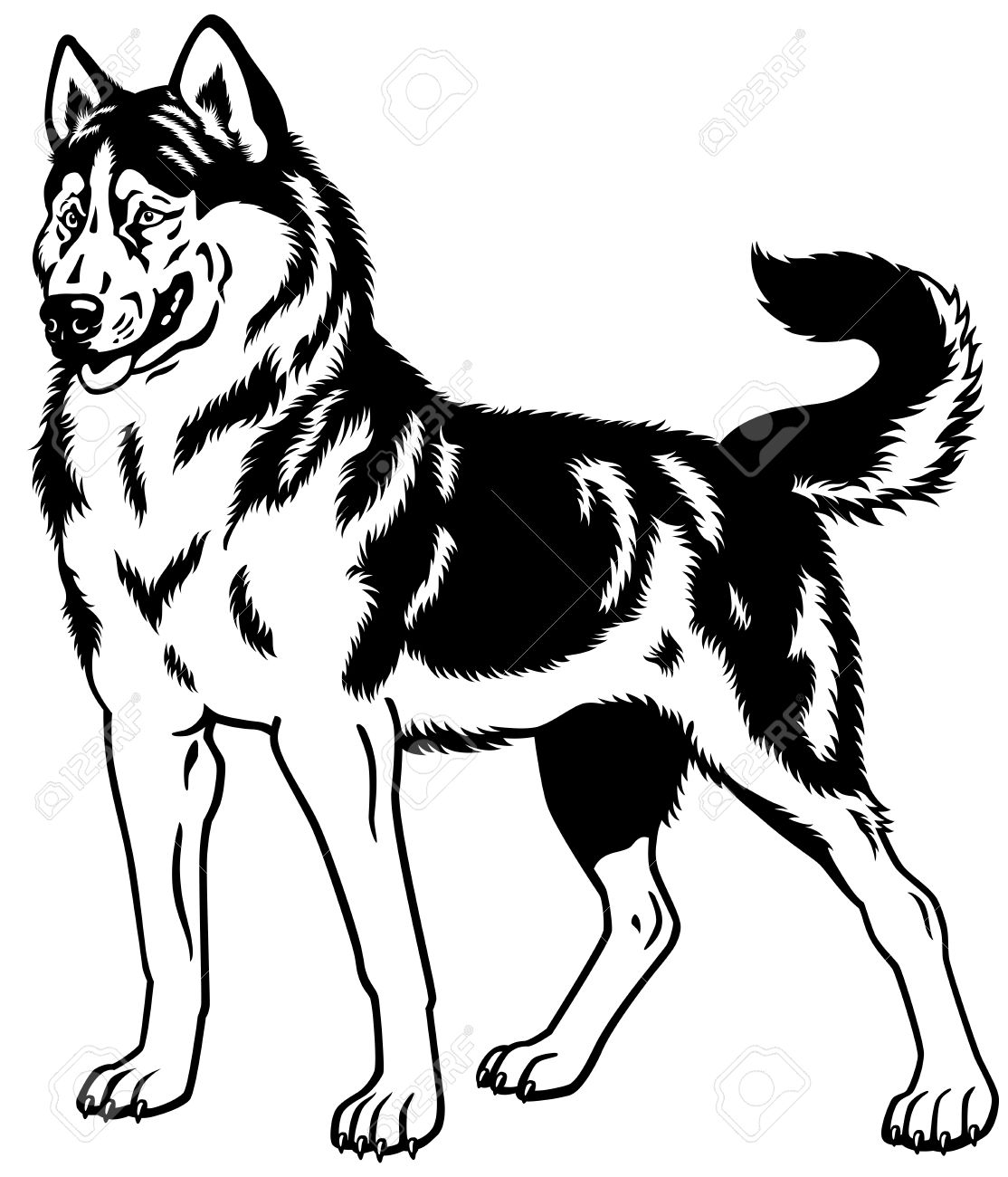 Vector pencil and in. Husky clipart