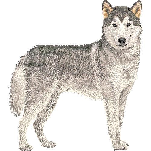 White . Husky clipart