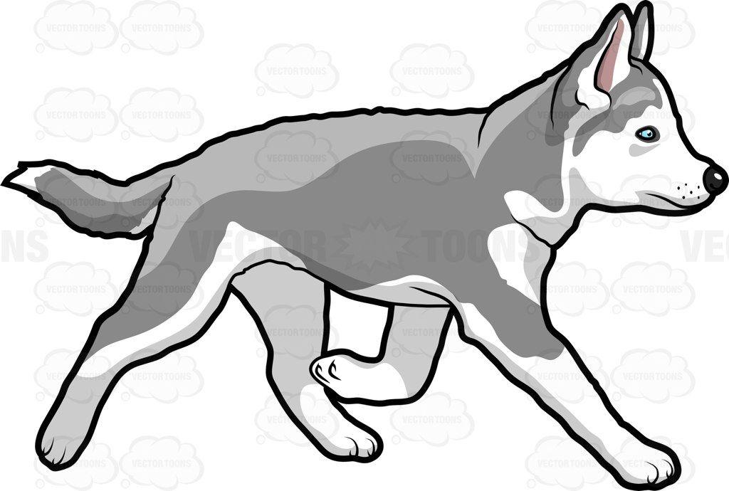 Husky clipart big dog. A beautiful running on