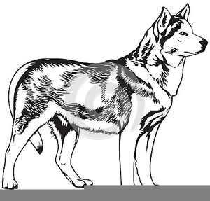 Free dog images at. Husky clipart canine