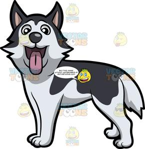 An excited young dog. Husky clipart canine