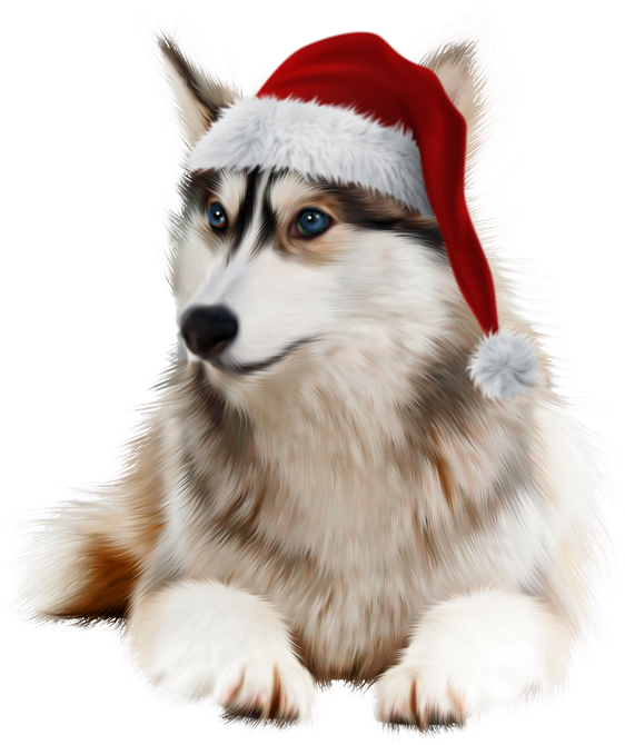 Husky clipart christmas. Tube noel animaux dog