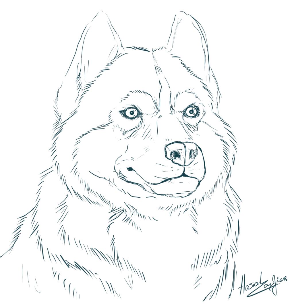 collection of printable. Husky clipart coloring page