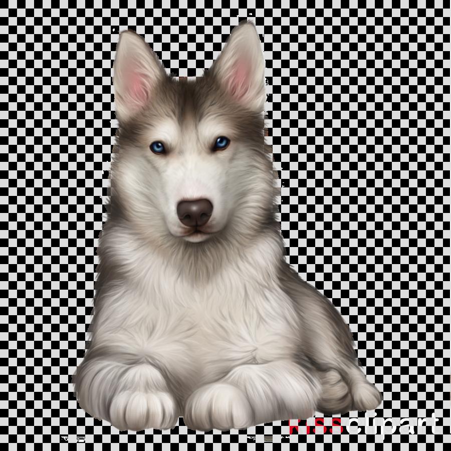 Husky clipart dog indian. Siberian breed alaskan malamute