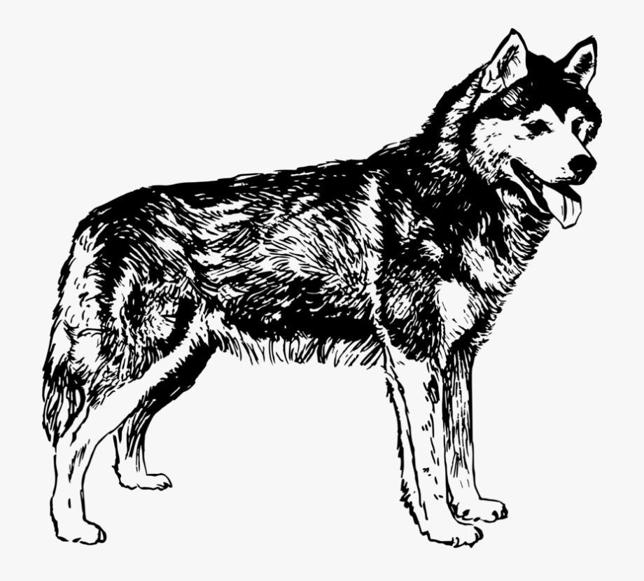 Husky clipart gray dog. Transparent black and white