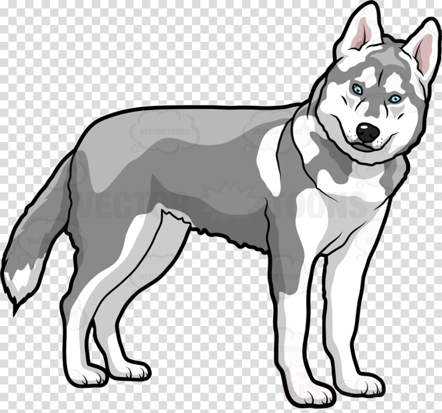 Wolf cartoon illustration dog. Husky clipart huskey