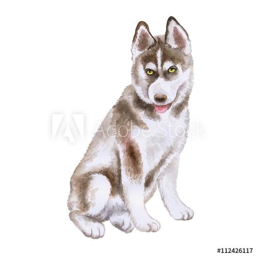 Watercolor closeup portrait of. Husky clipart large dog