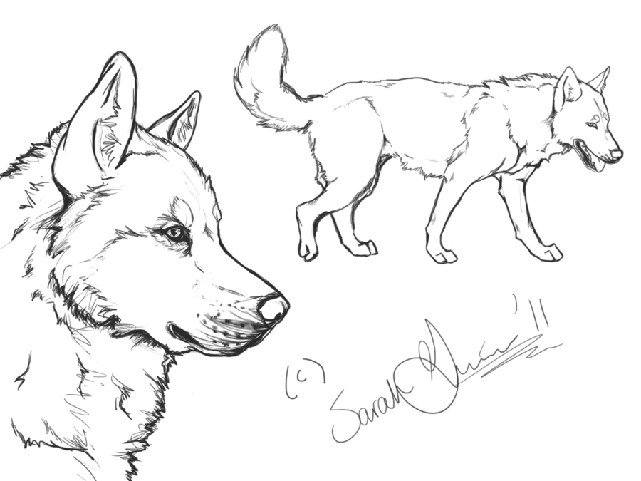 Husky clipart simple drawing. Siberian lineart by airhead