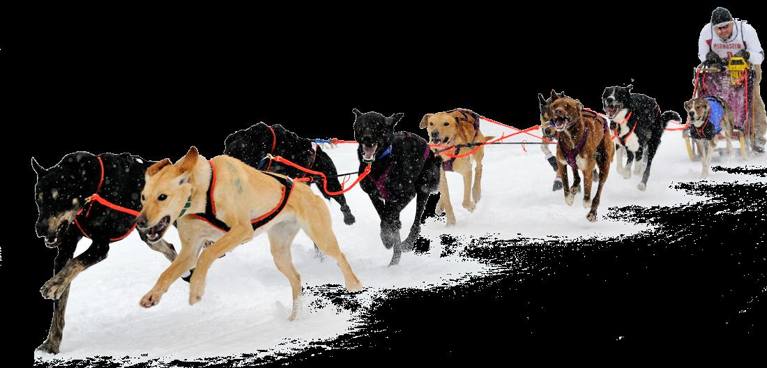 Husky clipart sled dog. Png hd transparent images