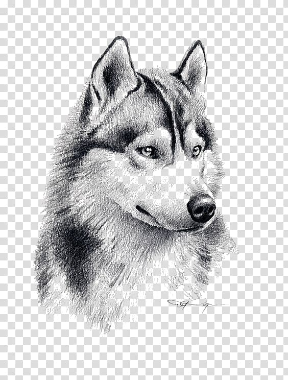 Painting siberian puppy drawing. Husky clipart wolf