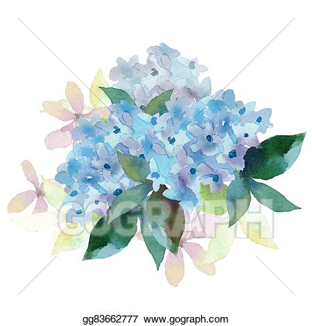Vector illustration of flowers. Hydrangea clipart