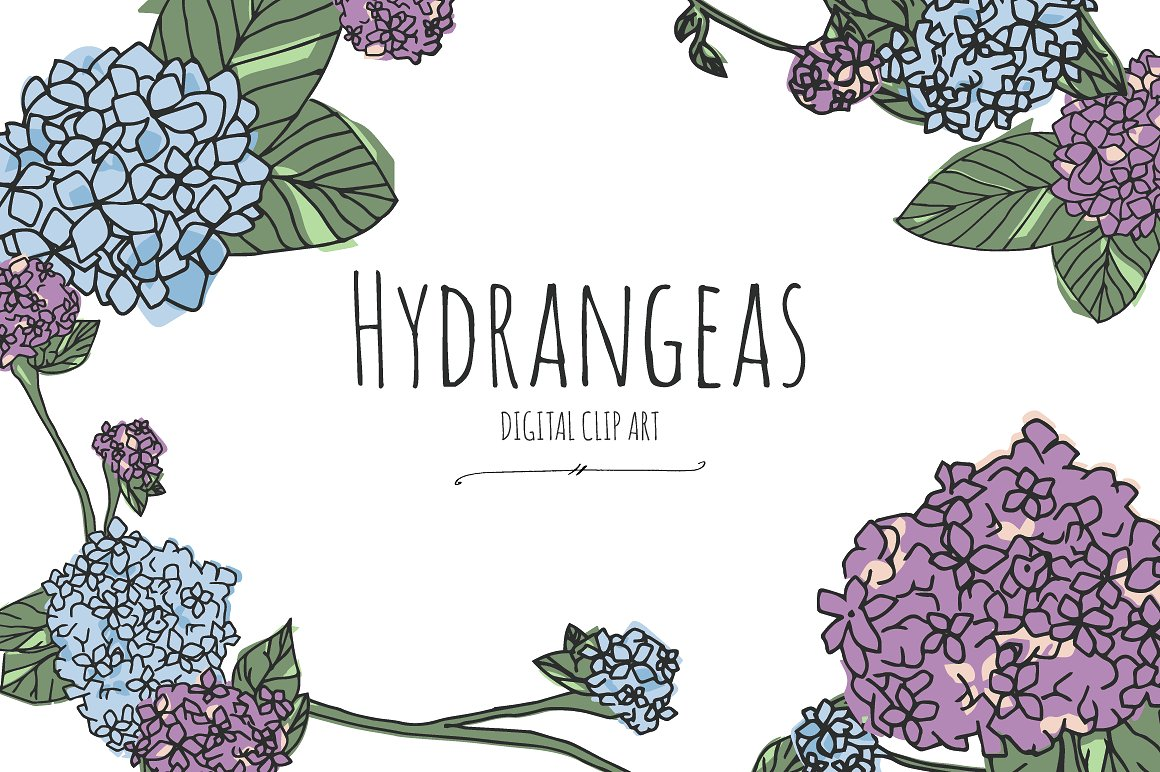 Hydrangeas digital clip art. Hydrangea clipart