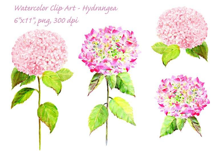 Hydrangea clipart. Watercolor pink clip art