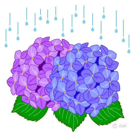 Free of the rainy. Hydrangea clipart