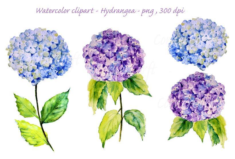 Watercolour blue illustration digital. Hydrangea clipart