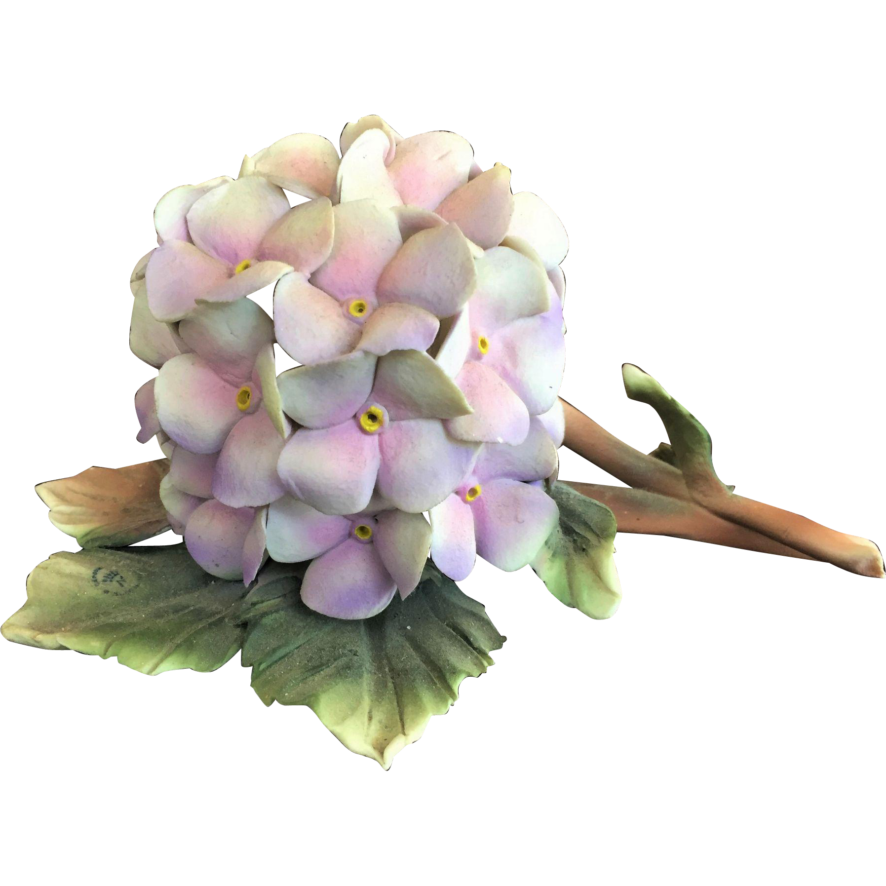 Rare capodimonte cesar savastano. Hydrangea clipart high resolution