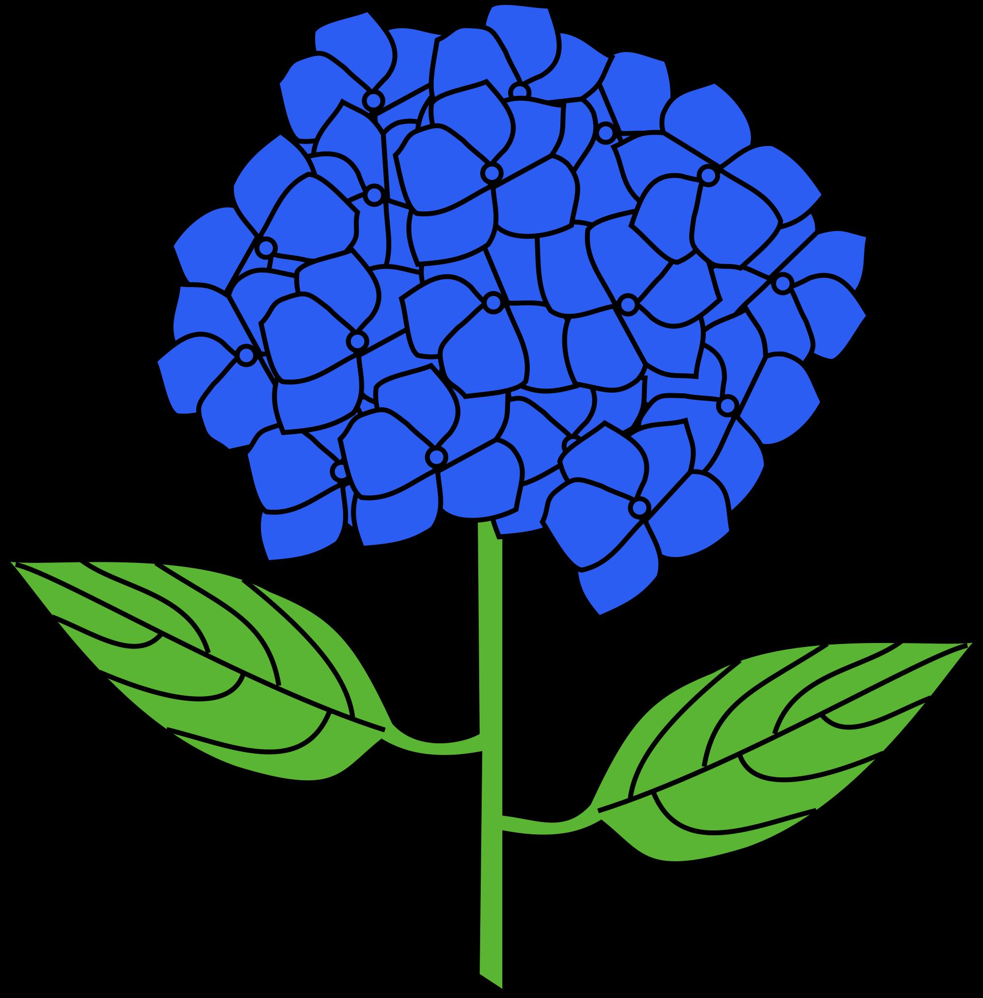 Hydrangea hydrangea bush