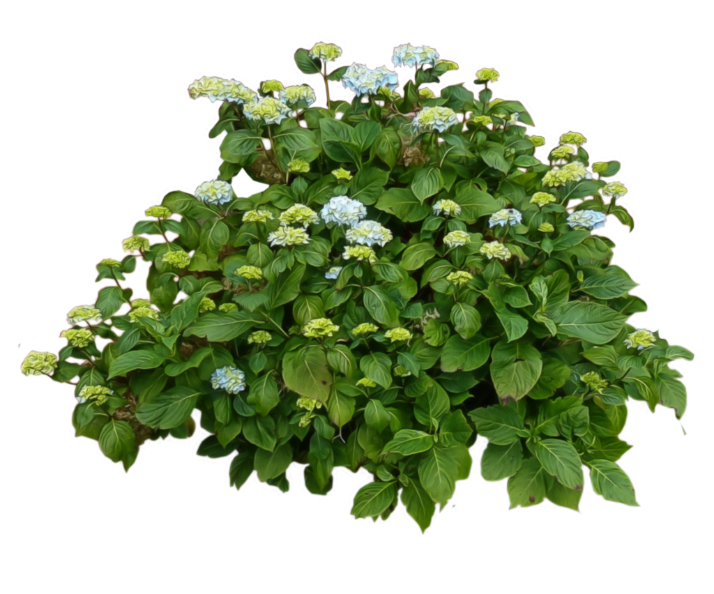 Flower plant png. Vegetacion en formato para
