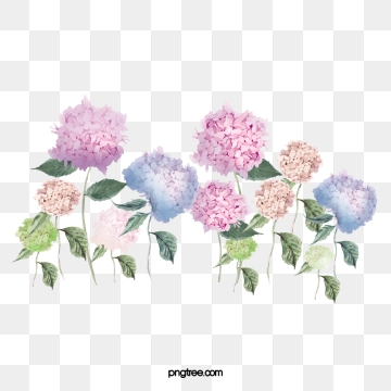 Png psd and with. Hydrangea clipart vector