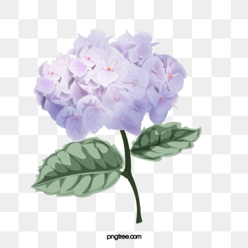 Hydrangea clipart vector. Png psd and with