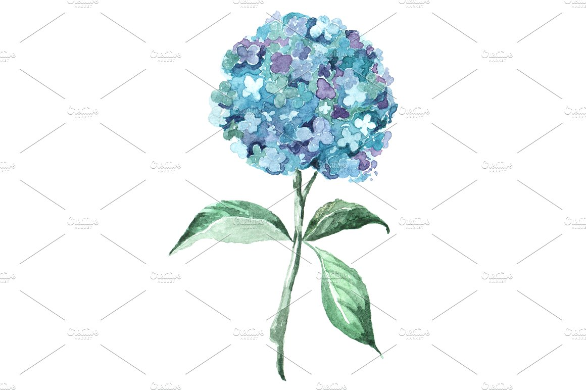 Blue watercolor clip art. Hydrangea clipart