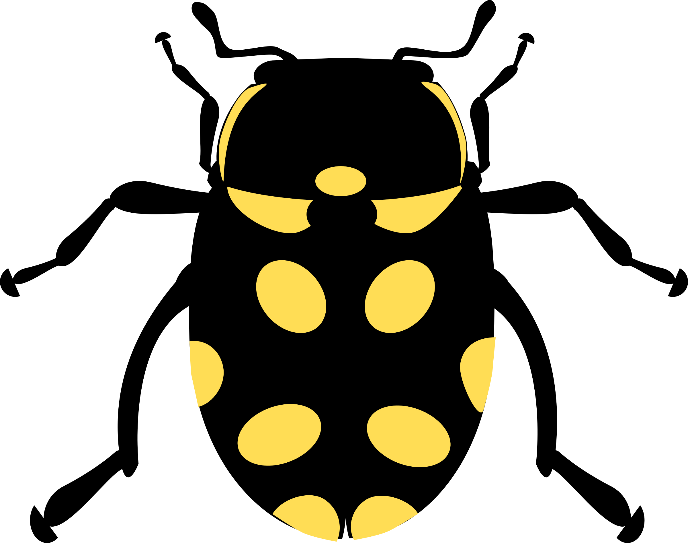 Insects clipart darkling beetle. Eriopis canrash bug big