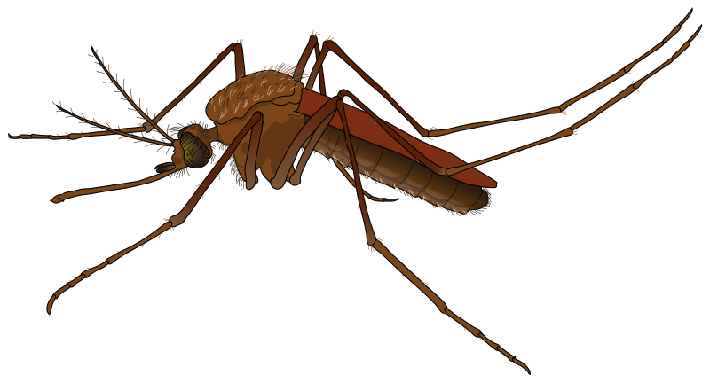 Pencil and in color. Insect clipart realistic