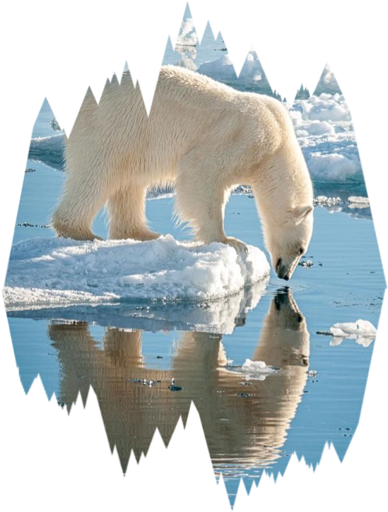 Ice scpolarbears polarbears freetoedit. Iceberg clipart polar bear