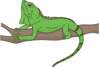 Reptiles clip art pictures. Iguana clipart
