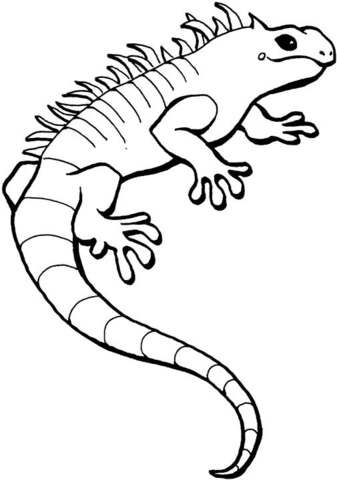 Iguana clipart black and white. Coloring page free printable