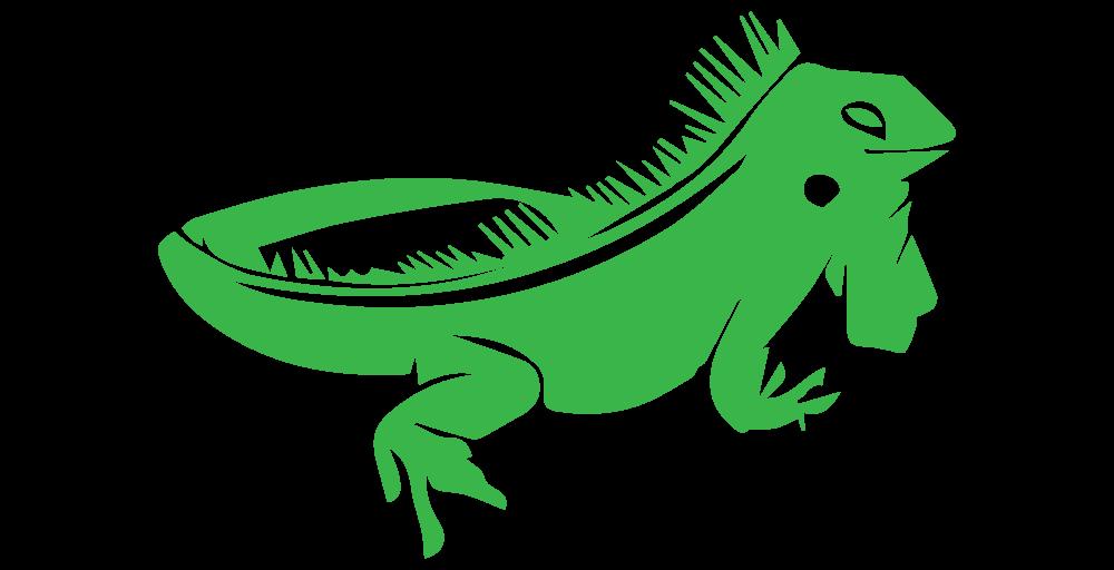 Lizard chameleons reptile green. Iguana clipart chameleon