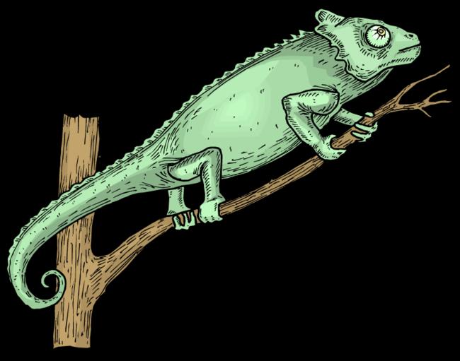 Forgetmenot cameleons. Iguana clipart chameleon