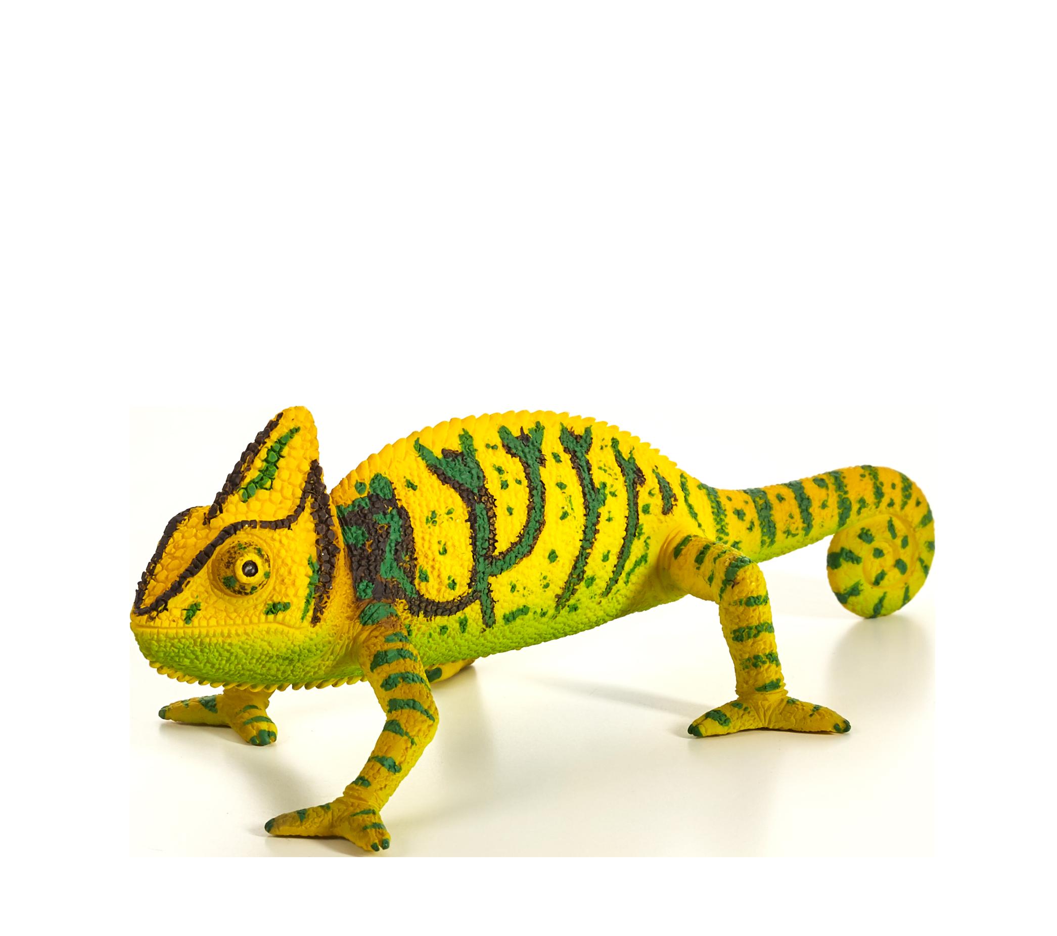 Mojo . Iguana clipart chameleon