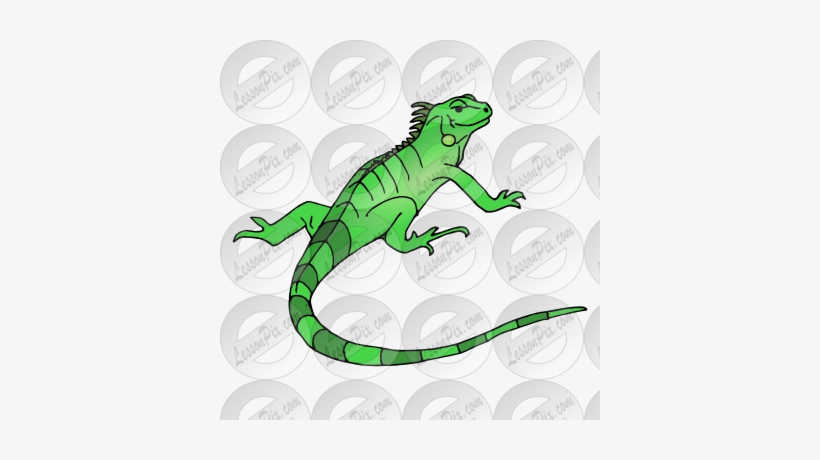 Iguana clipart downloadable. Collection of free drawing