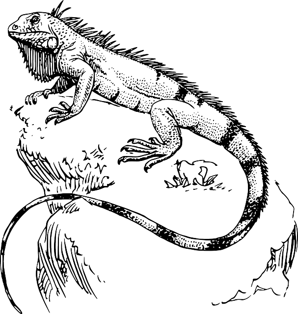 Drawing at getdrawings com. Iguana clipart downloadable