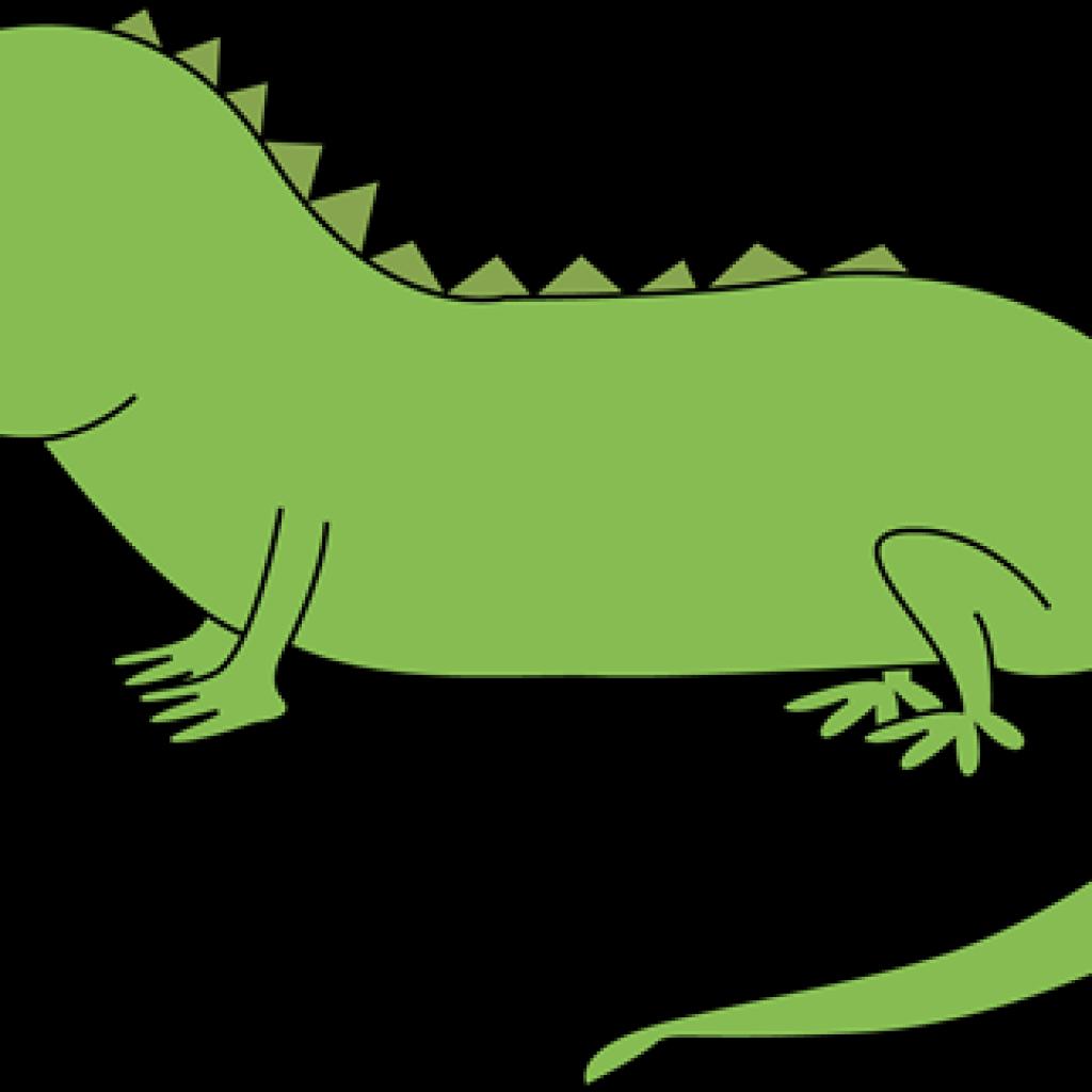 Iguana icky